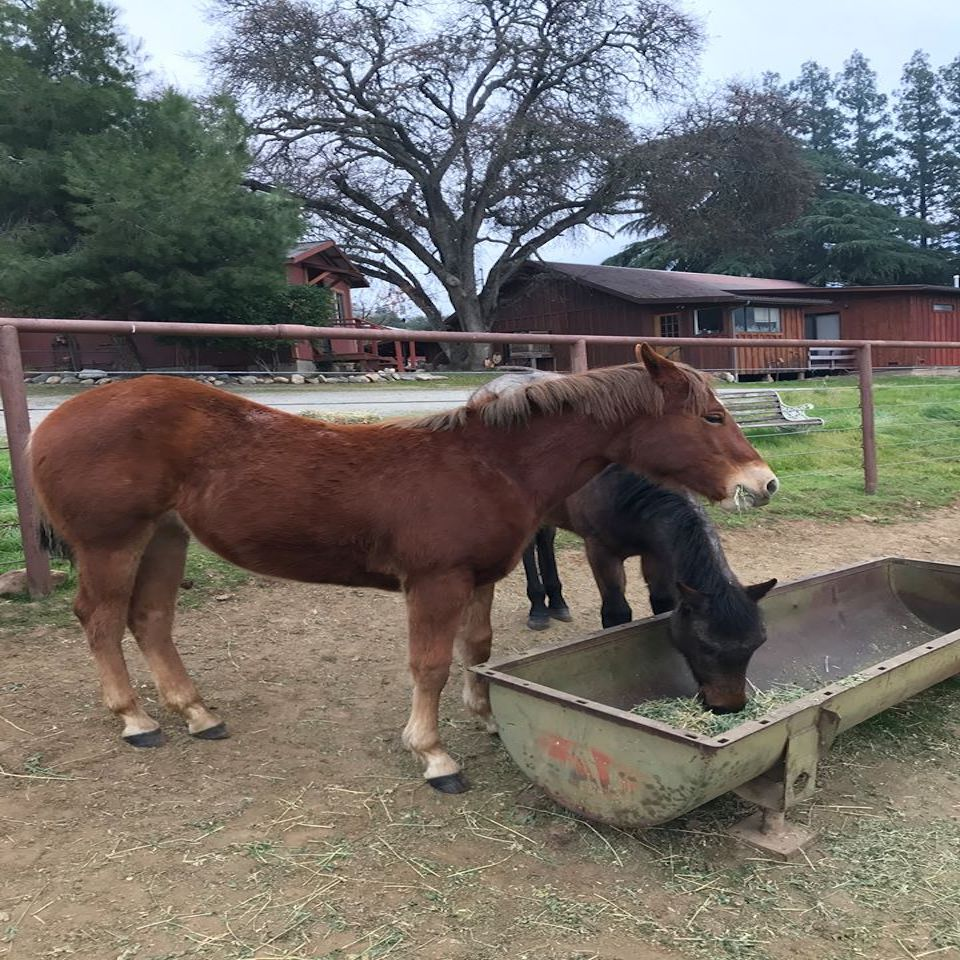 Horses for Sale & Training